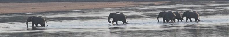 elephants-1024x168