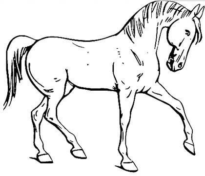 Dressur Pferd Malvorlage - anmutiges Pferd Ausmalbild