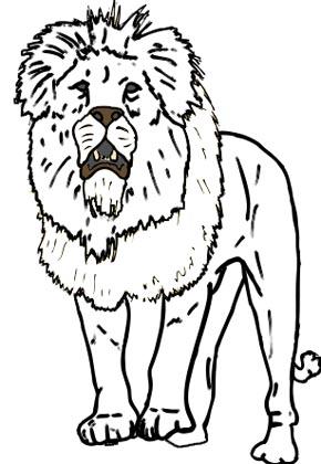 Löwe Malvorlage - männlicher afrikanischer Löwe zum