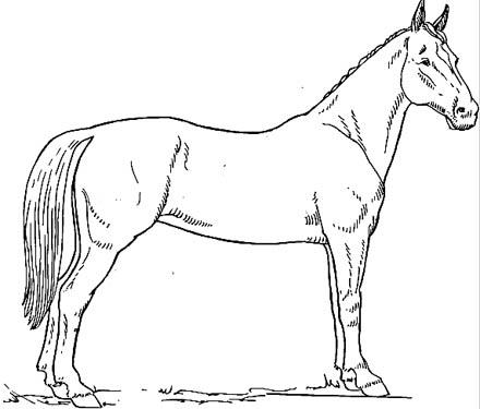 Pferd stehend Malvorlage - schönes Ausmalbild