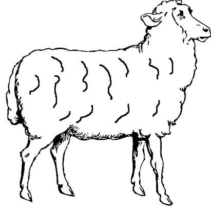 Schaf Malvorlage - Ausmalbild Schafe