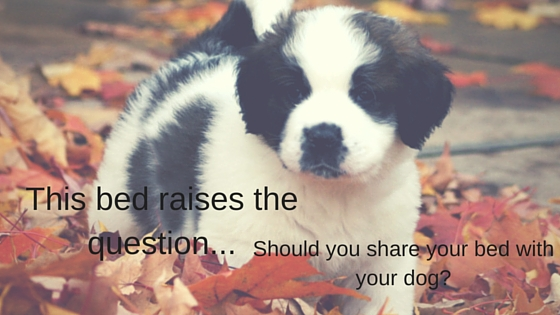 Should you share your bed with your dog?