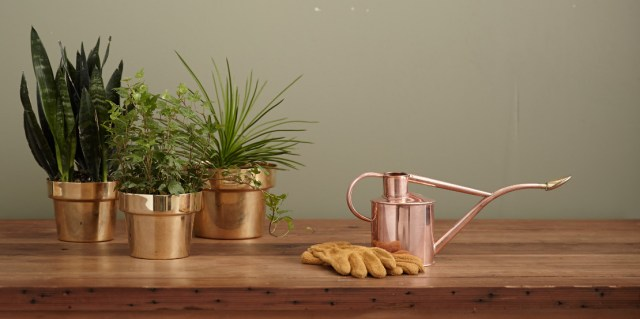 Putting plants in your room can help clean up the air pollution.
