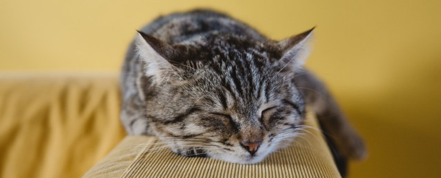 Sleeping with your cat on your bed can have a negative impact on your rest.