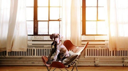 A dog sitting on a chair