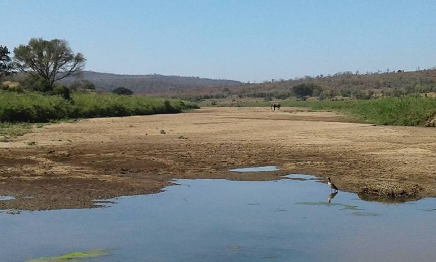 A solitary elephant scrapes at a dry riverbed in search of water as a pair of Egyptian geese gather by what remains of the river in Imfolozi Game Reserve