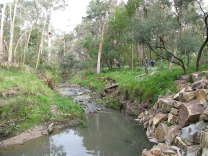 Mullum Mullum Creek in my neighborhood.