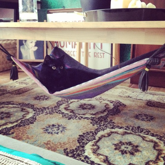 Take your cat on a magic carpet ride with this DIY cat bed made from an old towel. | www.themeowplace.com
