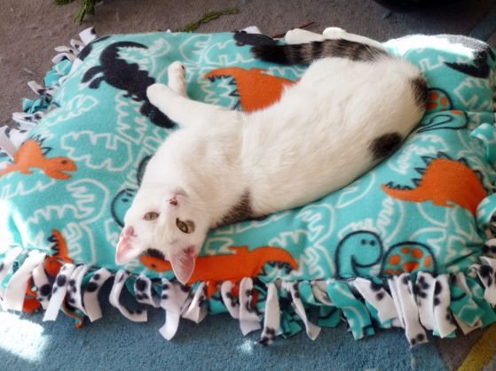 Don't know how to sew? No worries! This DIY cat bed simply ties together. | www.themeowplace.com #petbeds #DIY