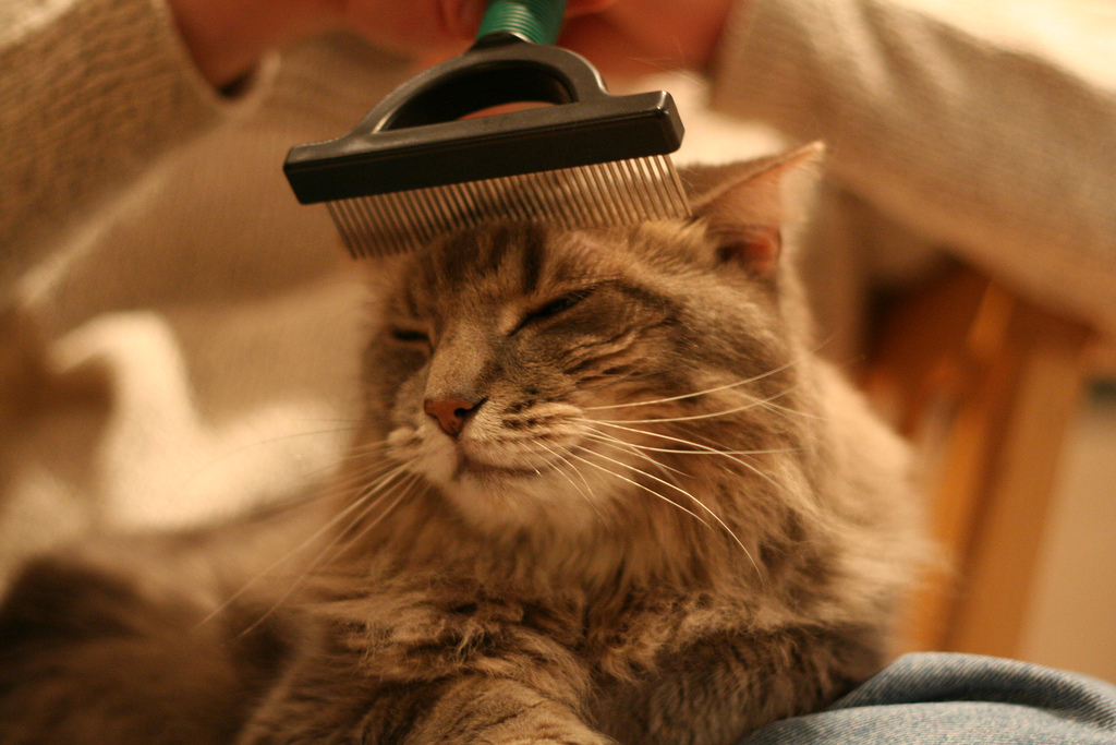 Image result for brush cat