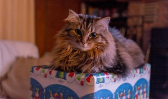 2016 Top 10 Christmas Gifts For Cats (And Cat Lovers!)