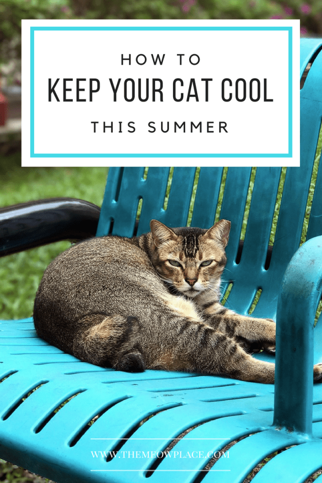 It's summertime, and kitty is looking for ways to cool down. Contrary to popular opinion, cats don't tolerate hot temperatures any better than humans. Heatstroke in cats is a common occurrence during hot summer months; that's why it's important to give your cat a little extra TLC to make sure they stay nice and cool. Lucky for you, we've got five pawsome tips for beating the summer heat.