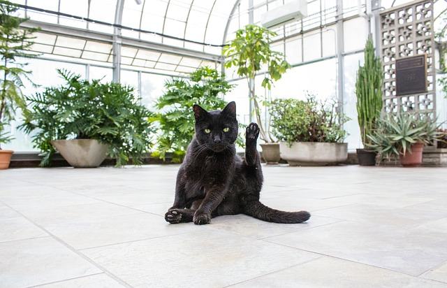 Are you sick of your cats destroying your indoor garden? We rounded up a few helpful tips for cat-proofing your indoor garden and protecting it from curious felines.