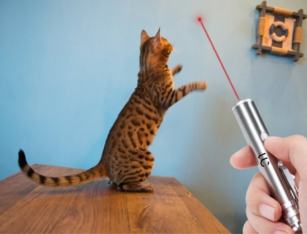 Finally, a cat laser pointer with an on/off switch! My hands get so cramped using traditional laser pointers, but this changes the game for cat owners everywhere. Get yours on Amazon by tapping the picture!