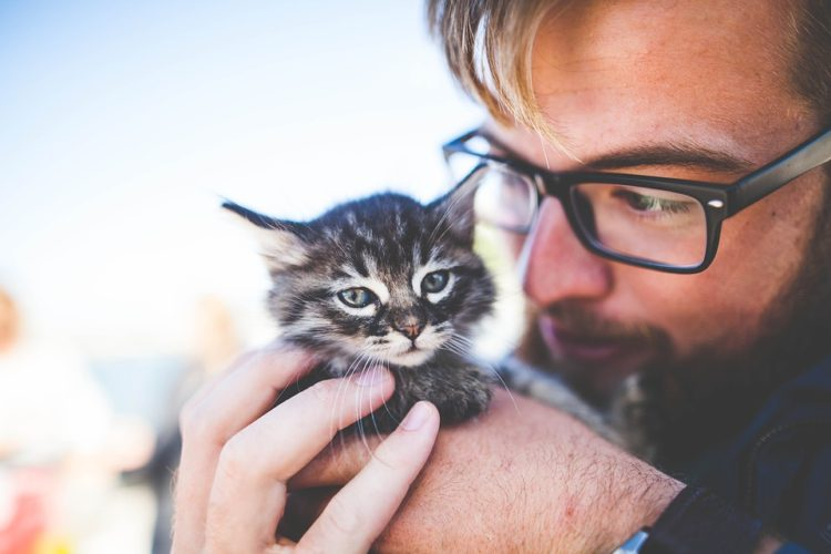 Are you a dude bro in search of a badass pet? Don't scratch cats off your list just yet - we've got five of the manliest cat breeds for you right here. Tap the picture to keep reading.