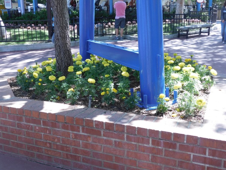 Here's some of the new flowers in the planters by the Carousel and the Helpful Honda Express.