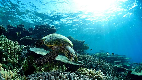 Hd Wallpapers Pack For Windows 10 Sea Turtles Theme For Windows 10 8 7