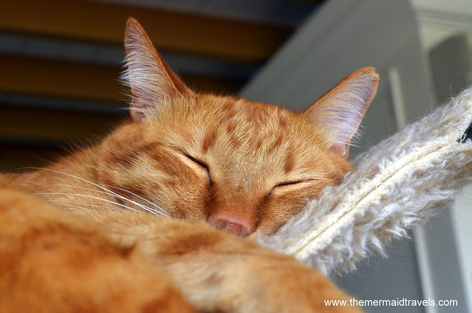 The Kitties of Neko No Niwa Cat Cafe