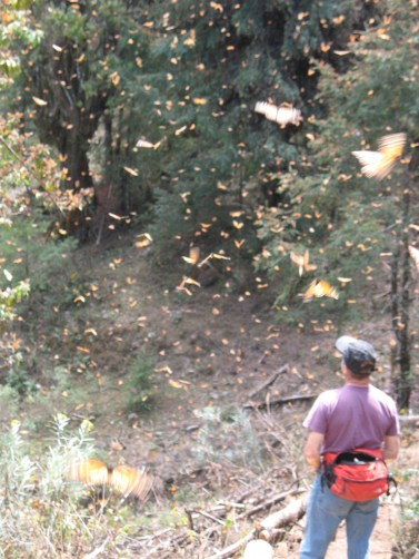 The Monarch Biosphere Reserve (courtesy of Betsy McNair)