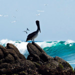 Ixtapa is home to more than 320 birds; photo from Ixtapa-Zihuatanejo (http://www.visitiz.travel/)
