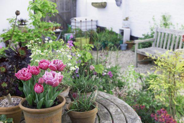 Use lots of pots in a seaside garden