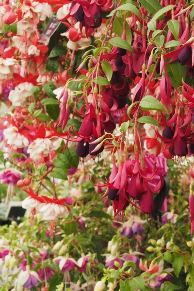 Add an exotic touch with familiar fuschias.