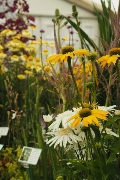 Pick plants for pollinators