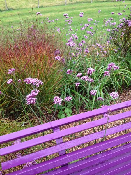 The planting echoing the bench colour at Sussex Prairie Gardens