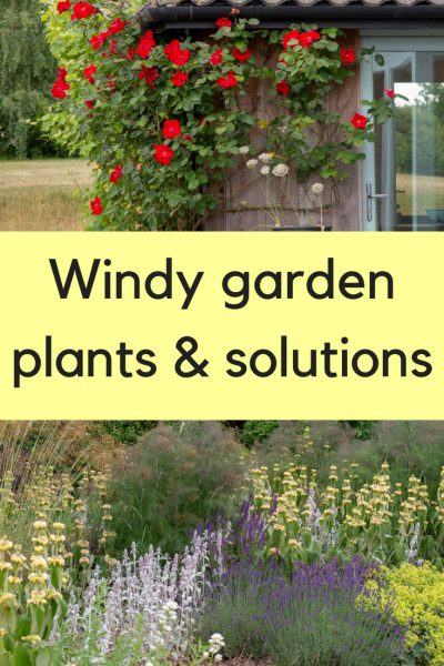 Windy garden plants and solutions - easy tips to make your garden more colourful and sheltered. #gardening #gardentips