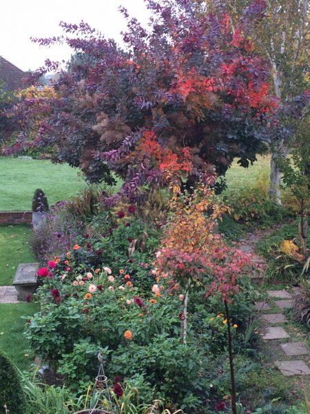 Autumn colour trees
