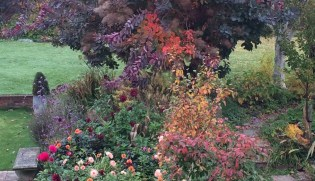 The 8 best perfect-for-privacy garden trees - The Middle
