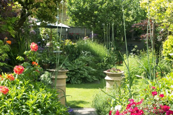 Norman Road garden, open for the NGS and also for Faversham Open Gardens