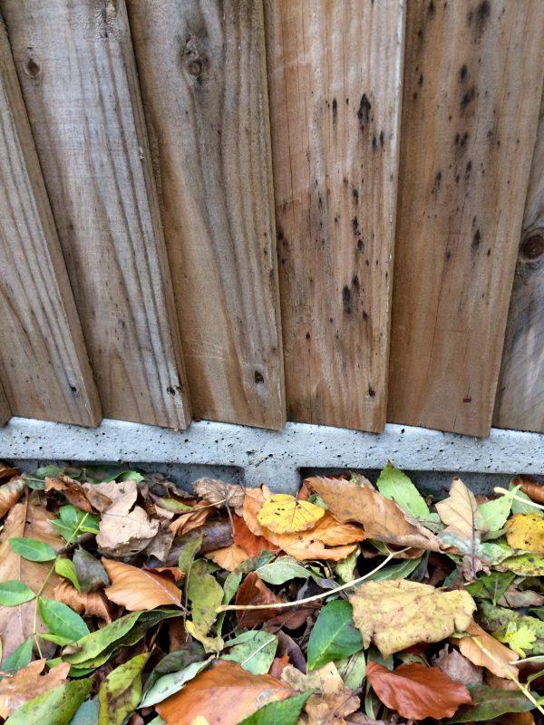 Gravel boards harm wildlife
