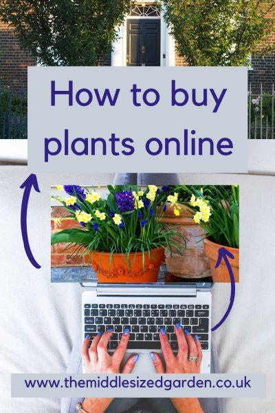 How to buy plants online