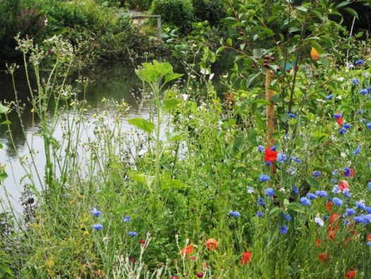 Meadow planting for wildlife