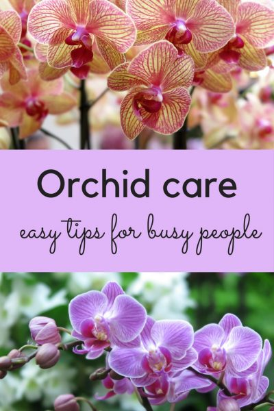 Easy tips for orchid care