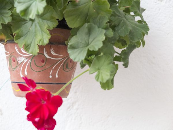 Plants for wall pots