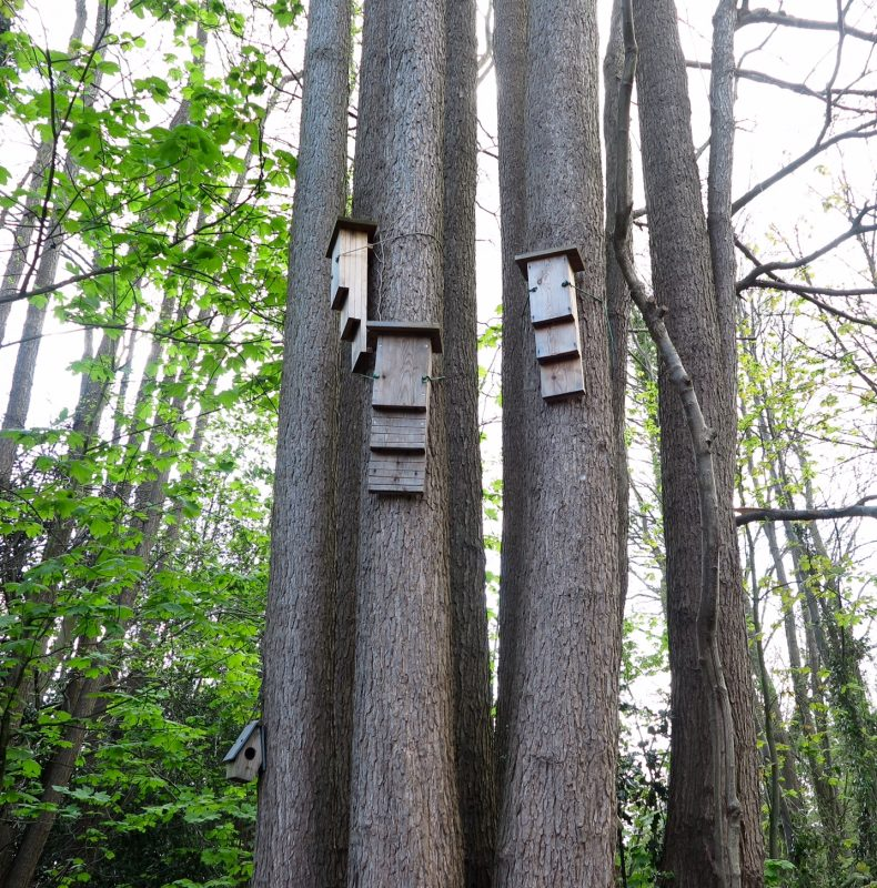 How to position bat boxes in trees