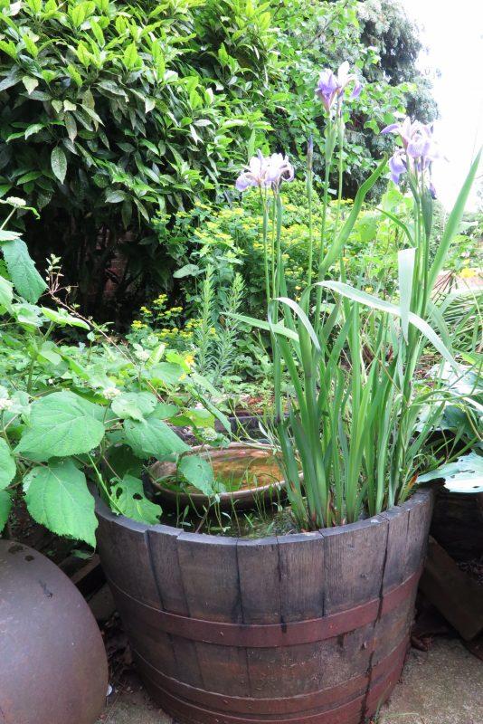 Make a mini wildlife pond from an oak barrel
