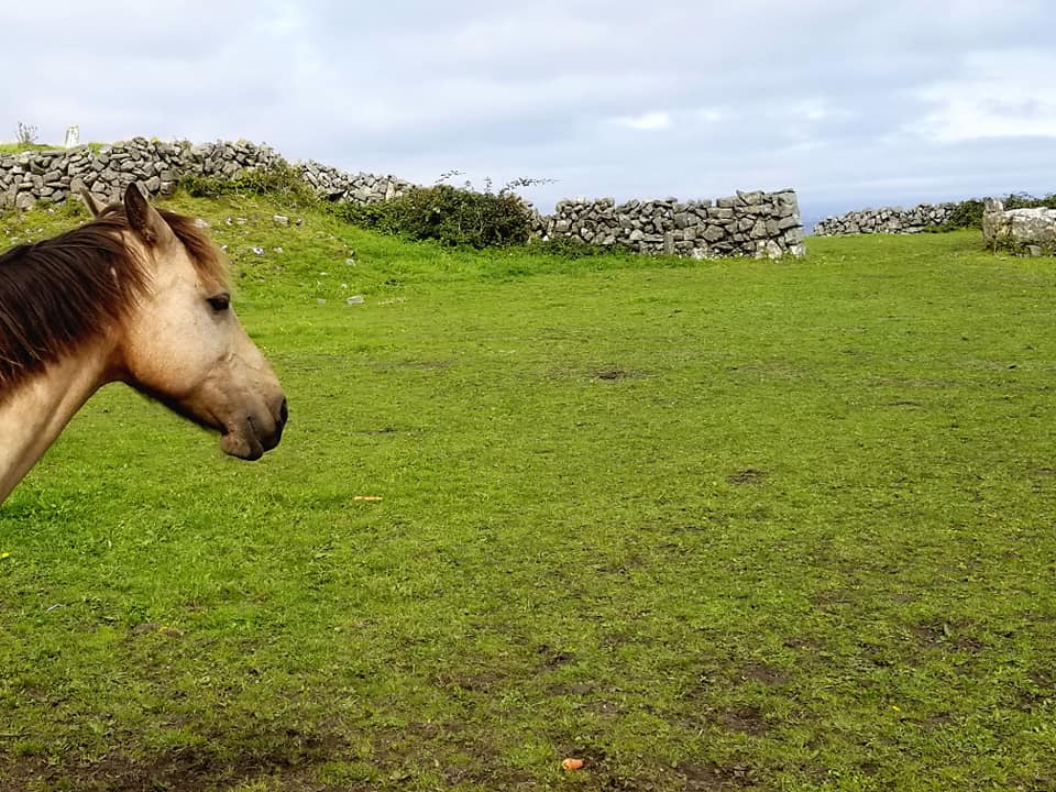 Horsehead on left of image looking out over grass, stone walls, and Atlantic ocean on the island of Inis Mor.