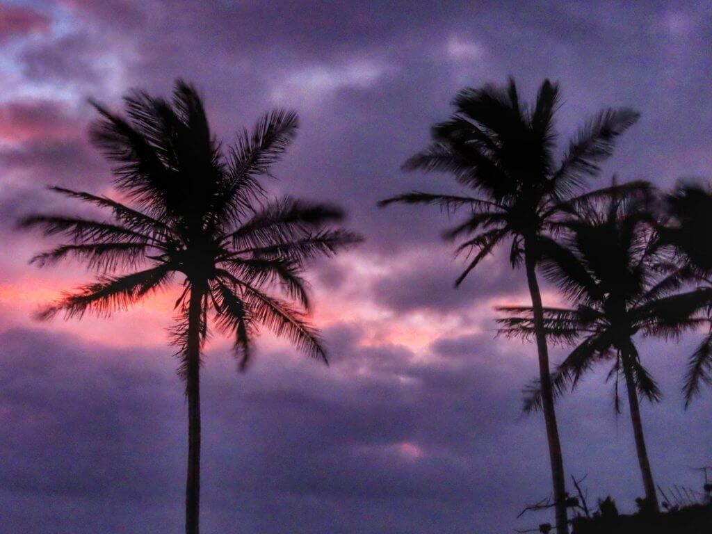 Silhouette of palm trees at sunrise at St. Catherine's Beach in St. George's, Bermuda
