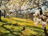 Things to do in Sibiu - Parcul Sub Arini