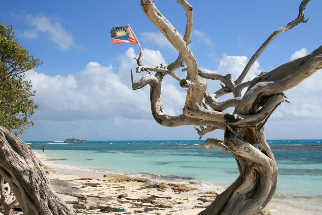 Beach in Antigua Barbuda with a small flag stuck on a tree.