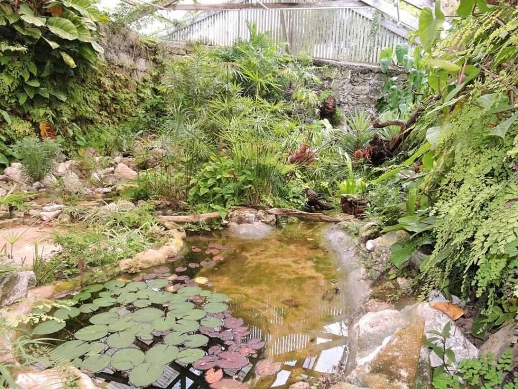 Interior portion of the Botanical Gardens in Bermuda