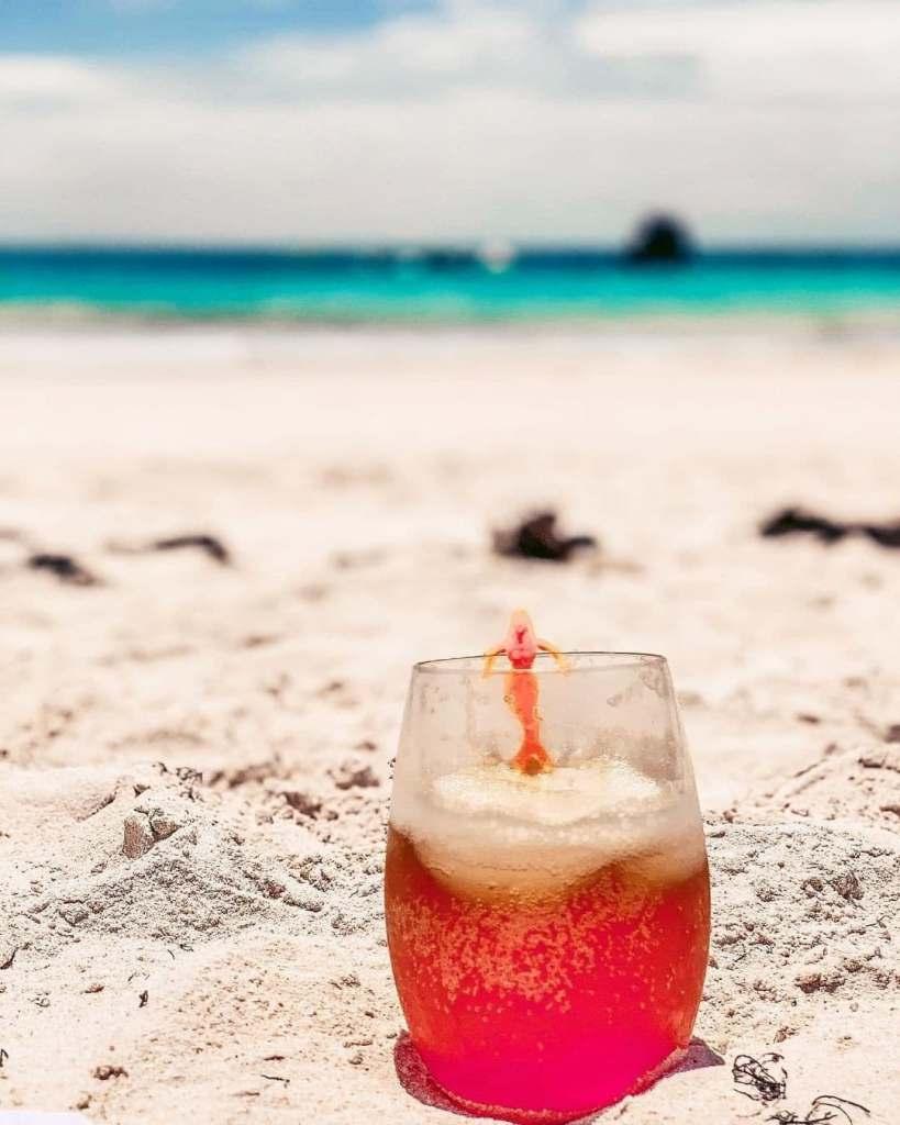 Dark n Stormy in the sand on a beach in Bermuda.