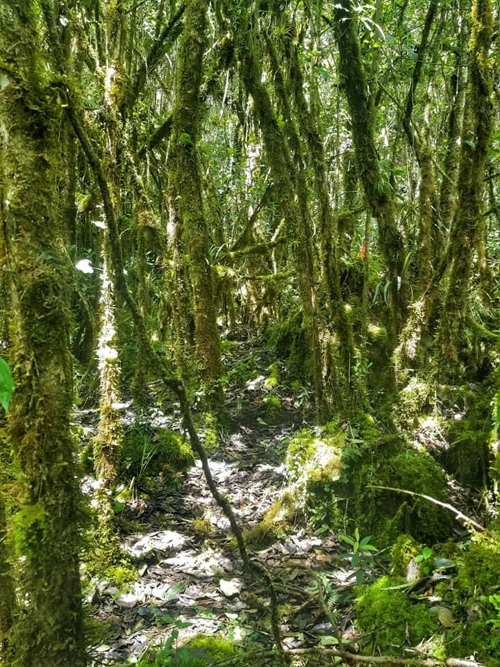 Cloud forest in Cuenca, Ecuador