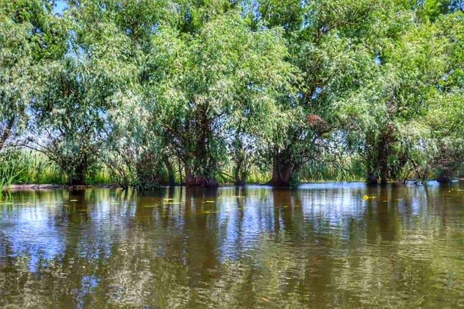Trees reflected in the water of the Danube River, Danube Delta, Romania