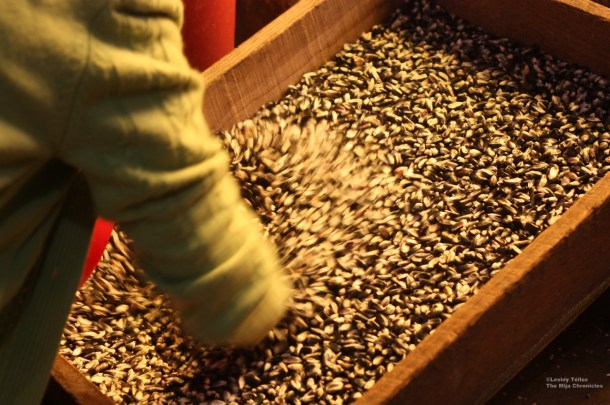 Shedding the papery skins of dried blue corn, to prepare it for nixtamal