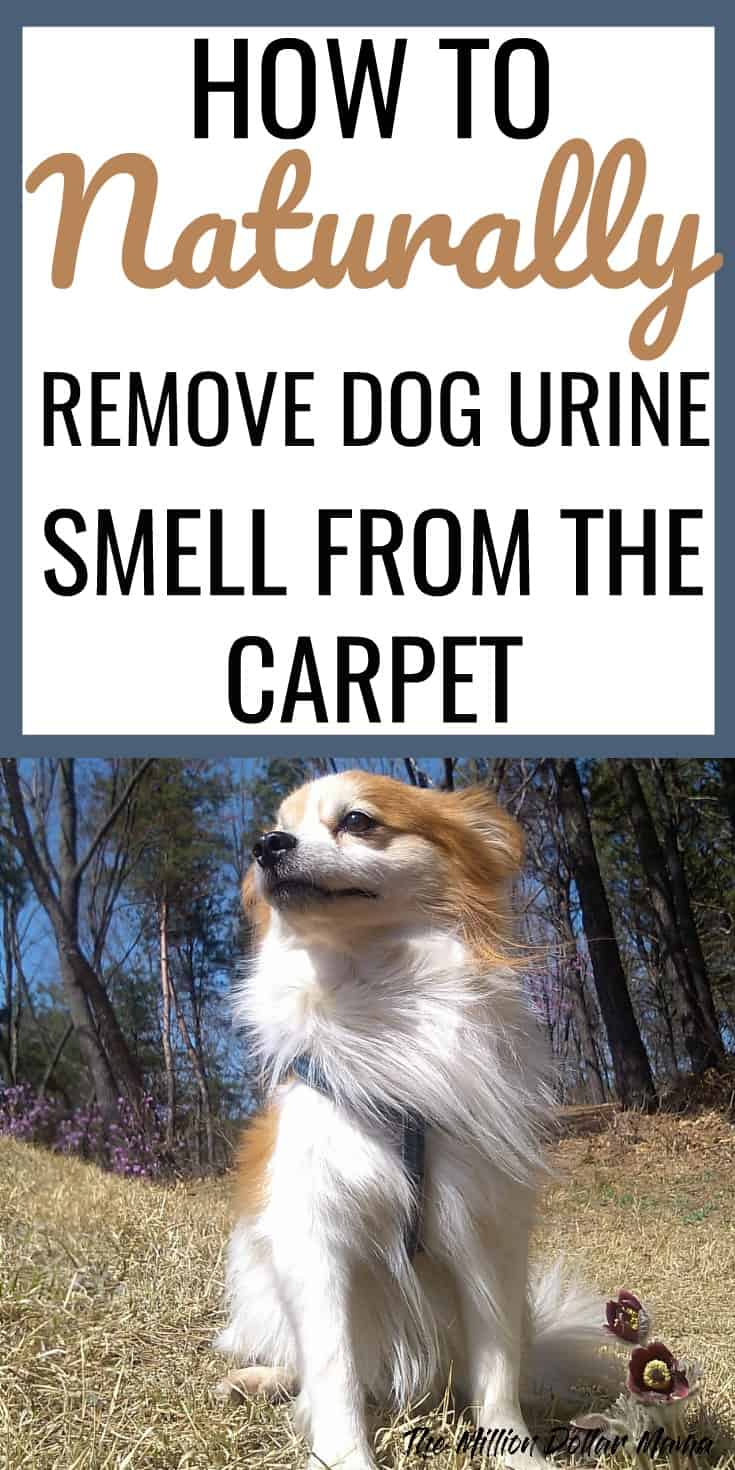 Pet Oxy Stain Remover