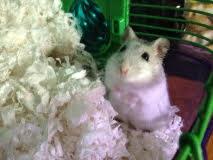 I've Got It: Hamster Healing Reiki Lessons